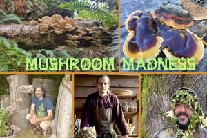 Mushroom Madness Workshop @ Elemental Academy  | Sooke | British Columbia | Canada